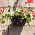 Hanging Baskets on Manoir